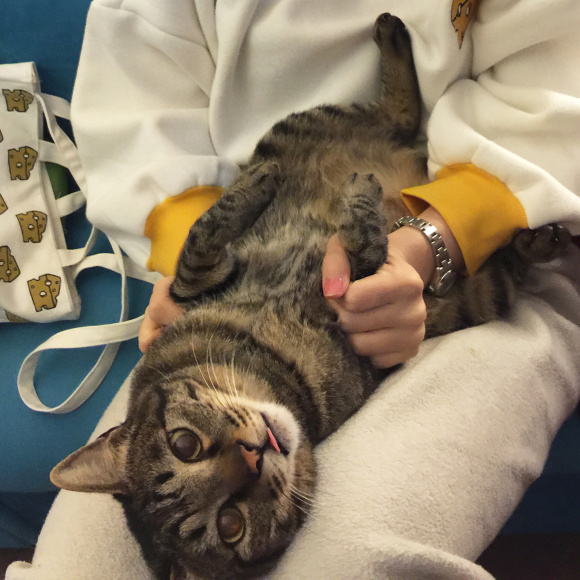 微信头像可爱小猫咪申舌头