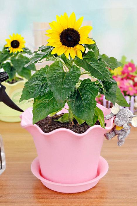 手绘花盆向日葵