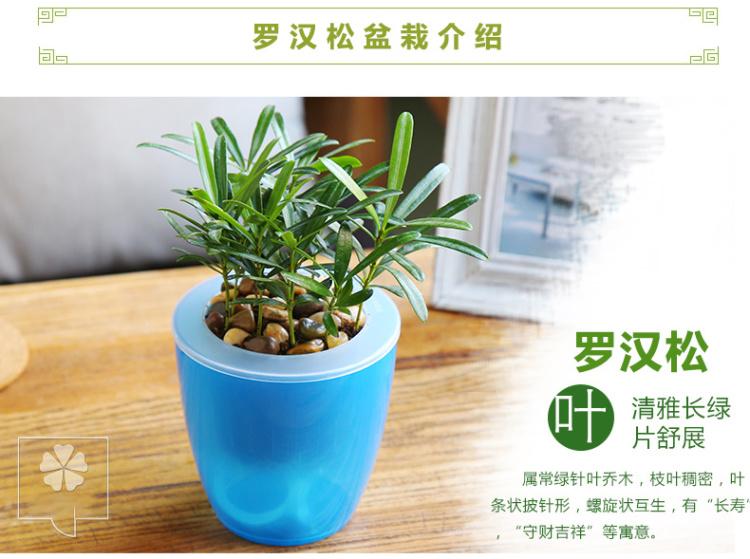 绿萝水培植物发财树盆栽 室内吸甲醇绿植驱蚊办公桌绿色盆景